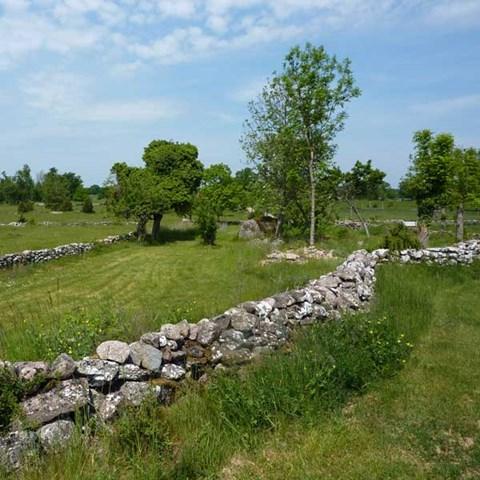 Murar i landskapet. Foto: Anders Glimskär, SLU.