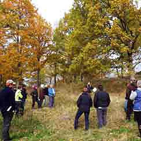 Skogsdag inom projektet Lövsuccé i landskapet. Foto: Marielle Gustafsson
