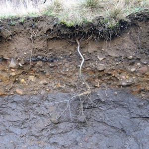 soil-profile.png