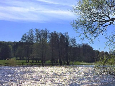 River in spring landscape. Photo.