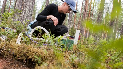 Linda Gruffman measures the soil respiration with a LiCor device at Åheden, Svartberget Research Station.