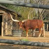Cow with long horns outdoors, photo.