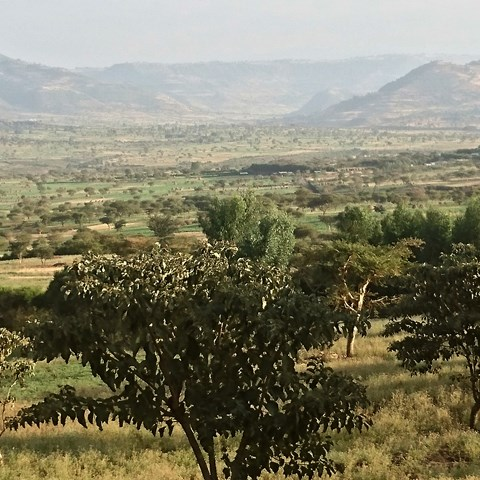 Swedish expert mission on bold Ethiopian forest sector