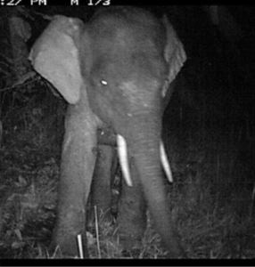 SLU-INIKEA-Rainforest-Elephant.JPG