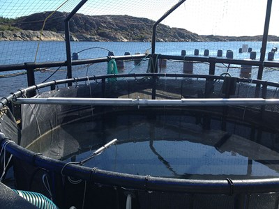 Fish and mussel farming in Kristineberg. Photo.