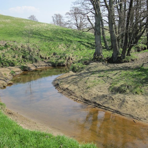 Stream and trees, photo.