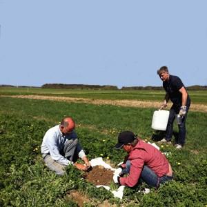 Crop Production Systems | Externwebben