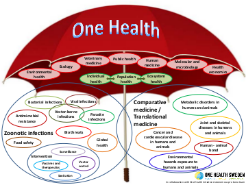 Illustration of an umbrella and several ellipses with texts, representing different terms related to One Health.