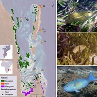 Map oc coral reefs and photo of fish