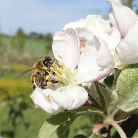 biforskning.jpg