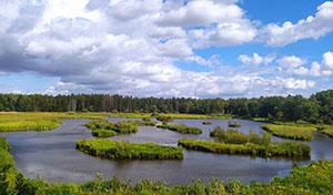 Våtmark med små öar.