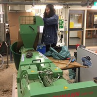 Doctoral student managing extruder machine with silage. Photo.