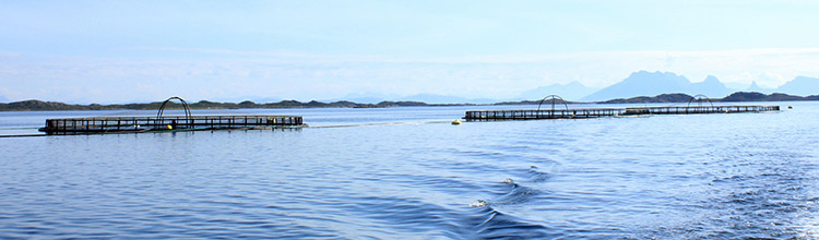 Two aquaculture cages out in the open water. Photo.