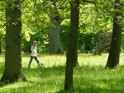 Man in white jacket crossing green meadow with trees.