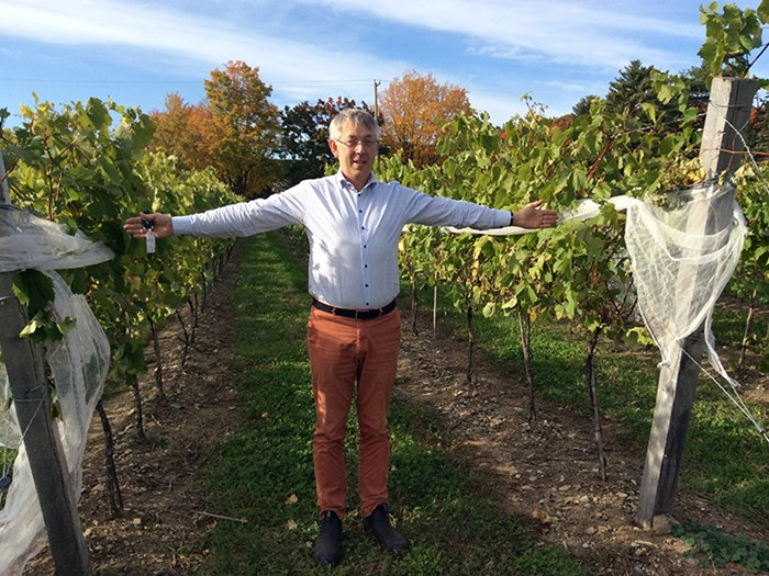 A man with white hair is standing in a wine field holding his arms out, photo.