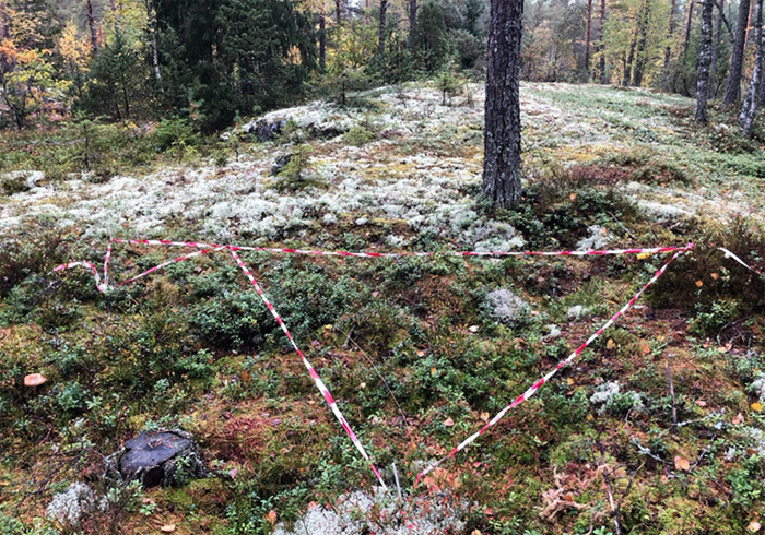 Forest ground with red and white plastic tape in a triangle, photo.