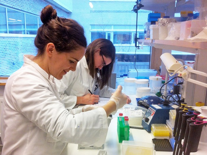 Two amiling women are pipetting in a laboratory, photo.