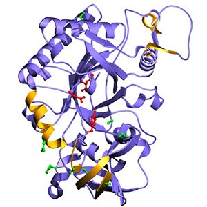 A protein model with lilac and yellow twists, illustration.