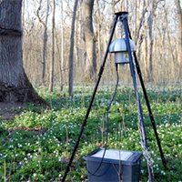 A white structure on a stand located on a forest floor with white flowers.. Photo.