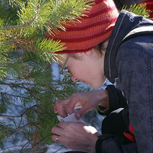 Hanna-sampling-pine-needles.jpg