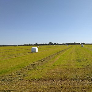 Field with swaths of cut grass and big plastic wrapped bales.