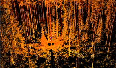 Point cloud of a pine forest. Image.