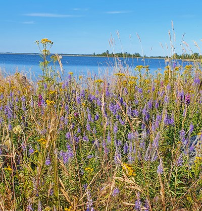 Flowers and gras with a backbround of ocean and sky. Photo.