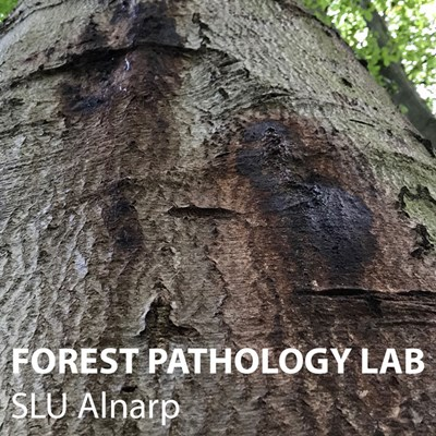 Forest-pathology-lab.jpg