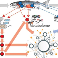 Fish and arrows pointing to microbiota. Illustration.