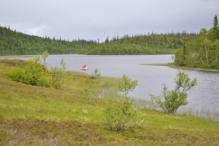 Lake with grass in the foreground and forest in the background and two persons in a rowing boat on the lake. Photo.