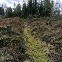 Dry forest ditch covered with Sphagnum. Photo.