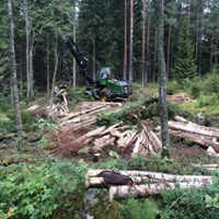 Harvester and felled trees in the forest. Photo.