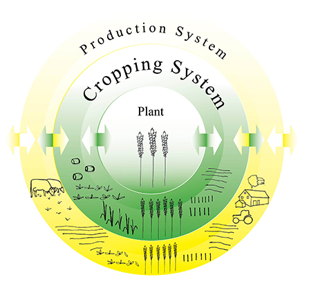 Agricultural Cropping Systems | Externwebben