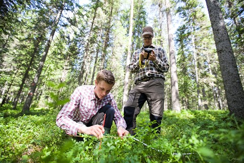 Forestry students conducts field measurements
