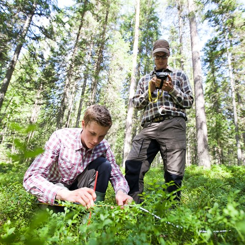 Forestry students conduct research in a forest.