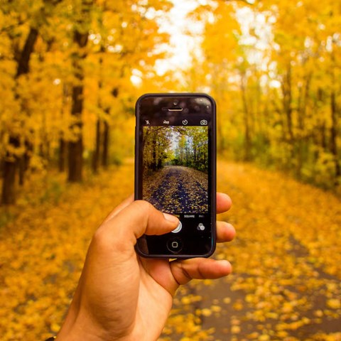 Hand holding up smartphone and takes a pictire of a forest during fall.