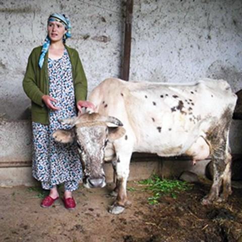 kvinna_med_ko_tadzjikistan300.jpg