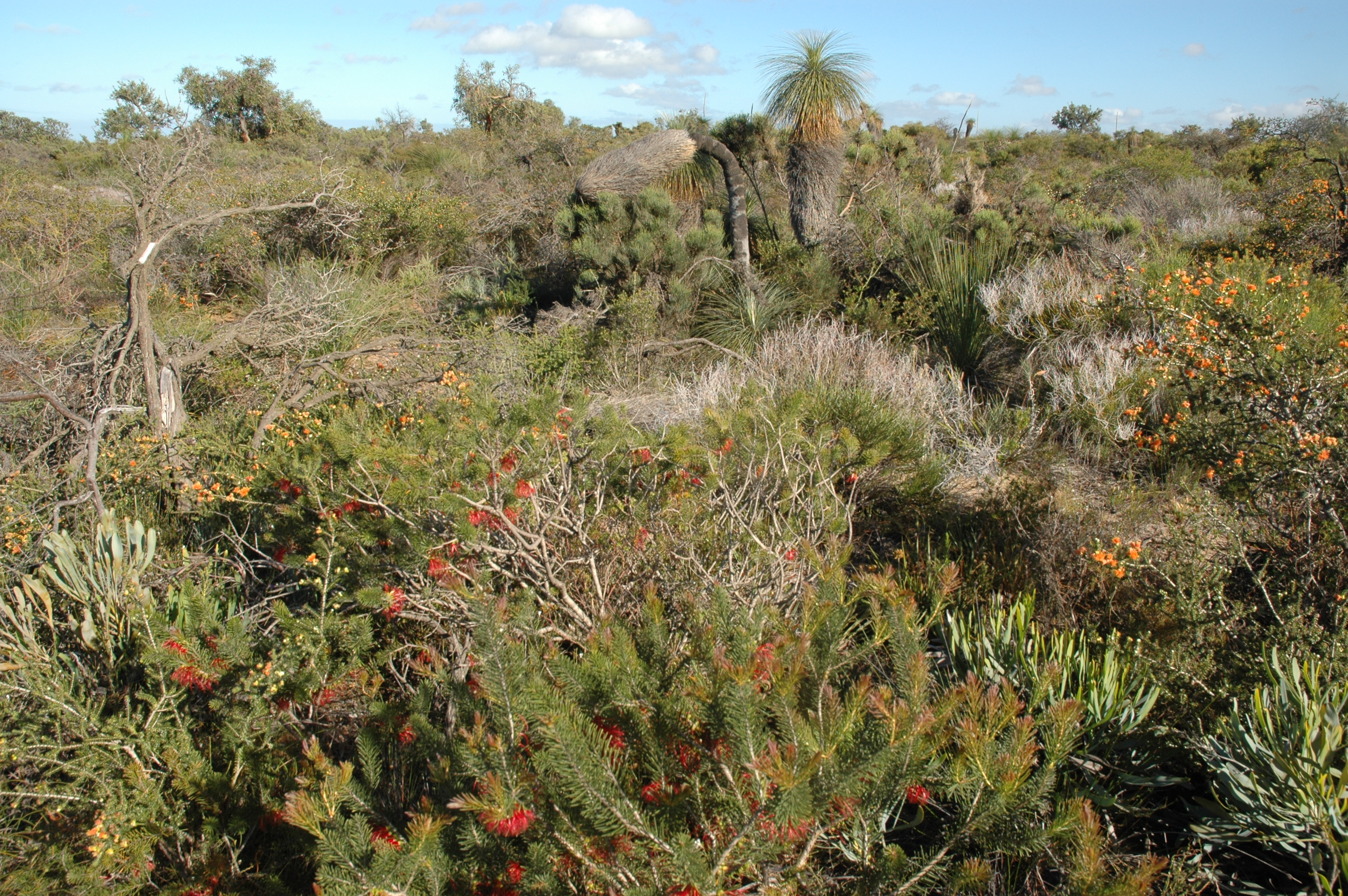 Soil organisms maintain high plant diversity sveriges for Soil organisms