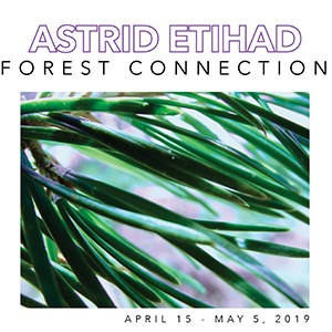 forest connection poster 300.jpg