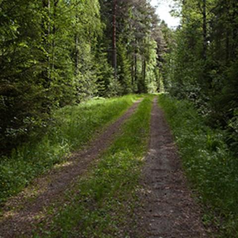skogsvaeg_jsg-300.jpg