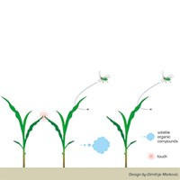 Touch and aphids-dm-300.jpg