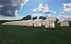 Foto på burar med tak