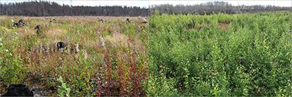 Foton på vegetation 2016 och 2019