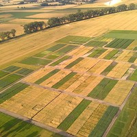 Aerial photo of long-term agricultural experiment