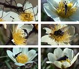 Insekter-Fjallsippa-litet.jpg