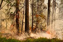 skogsbrand-ef-litet.jpg